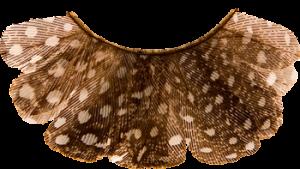 kryolan-peacock-lashes